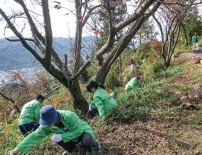 植林活動の様子